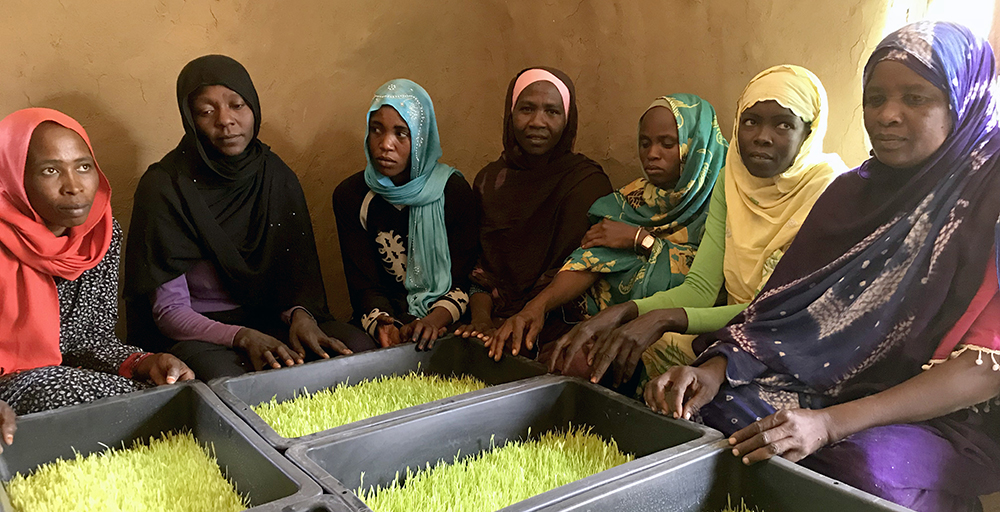 Refugees build their own hydroponics units from locally available materials in Chad
