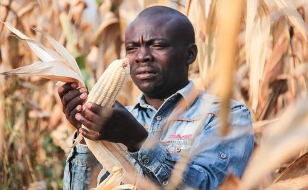 Picture: A farmer inspects his crop